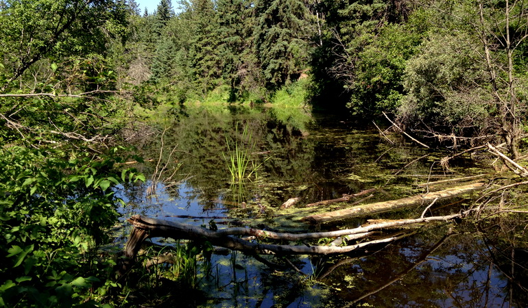 Whitemud Creek Boardwalk Replacement - Environmental Assessments