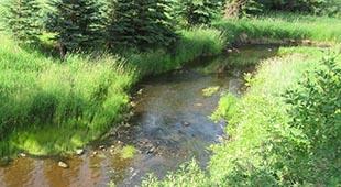 Blackmud Creek Thumbnail