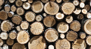 Houston Forest Products