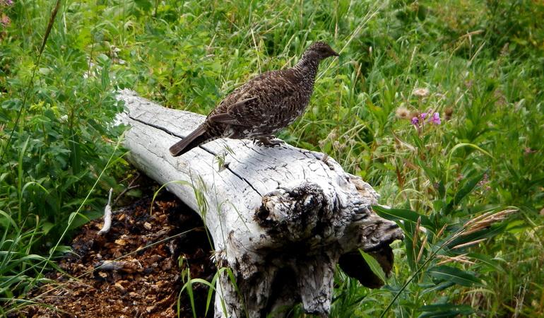 Regional Wildlife Monitoring Plan
