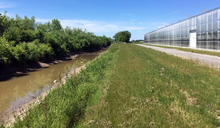 Irrigation Strategy