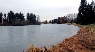 Hawrelak Lake Algae Remediation - Phase 1 Feasibility Study